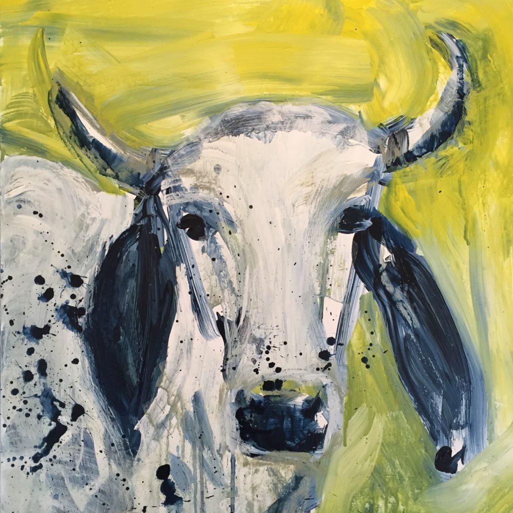 Brahmanische Kuh aus Queensland, Australien